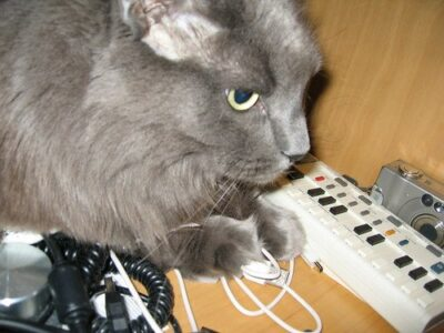 Cat with power strip