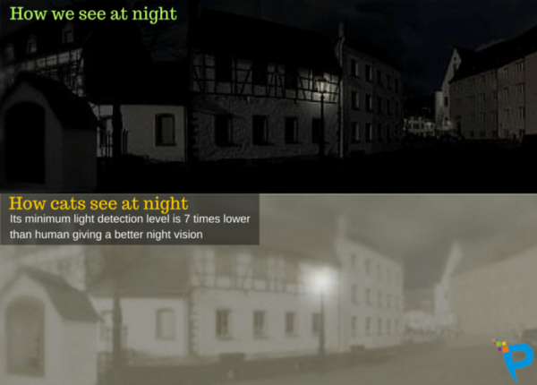 Night pic: One as we see; one as cats see