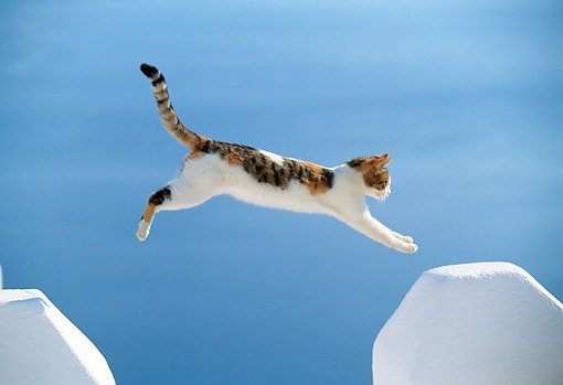calico and white cat jumping across space