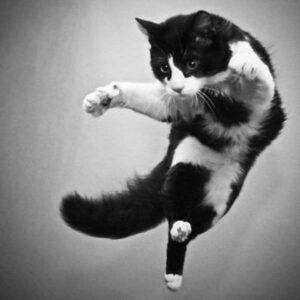 black & white cat sailing, no ground in sight