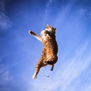 Cat high in air, no ground in sight