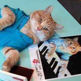 upper part of cat dressed in shirt; keyboard