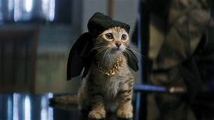 cat with swashbuckler hat