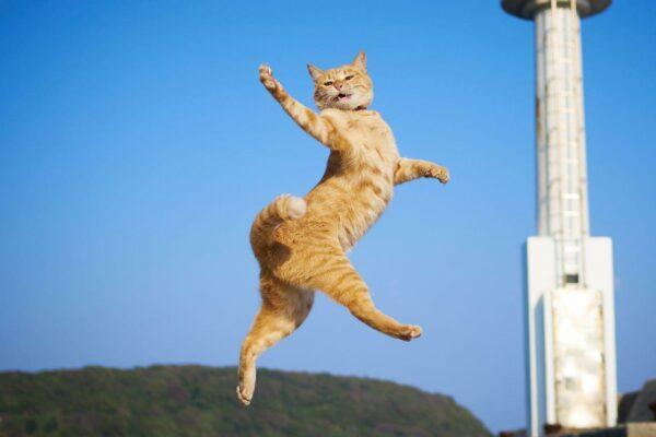 Orange cat walking on air