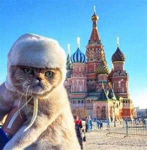 cat in fur coat; Russian palace