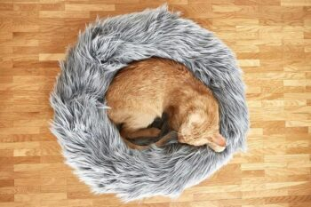 cat curled in furry bed