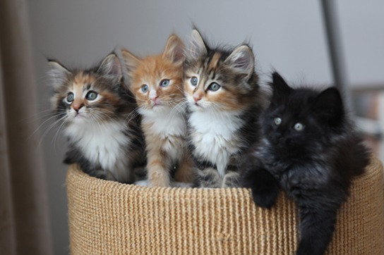 Four very different kittens