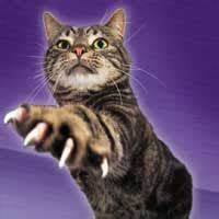 cat with one paw; claws extended