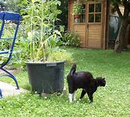 Cat spraying against planter