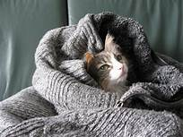 Cat nestled in a blanket bed