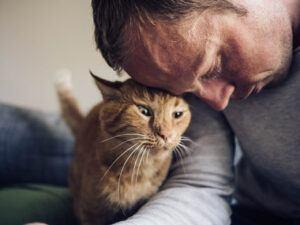 Orange cat rubbing against man's forehead