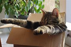 Cat in box with head and paws extended