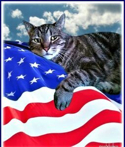 Cat on flag