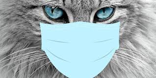 Cat with a covid mask