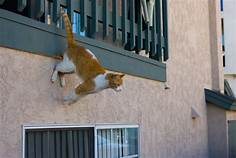 Cat jumping from balcony