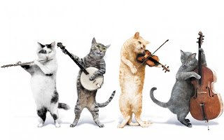4-cat band, all playing instruments