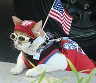 cat dressed for July 4, carrying flag