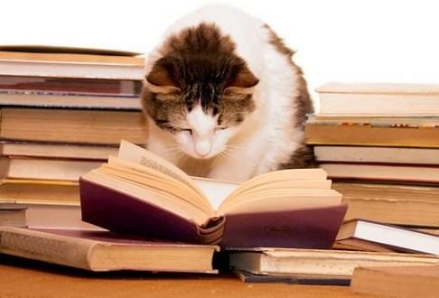 cat researching in book