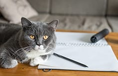 Cat with blood glucose journal