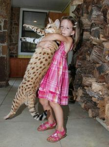 girl holding cat as tall as her