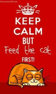 Keep calm but feed the cat first