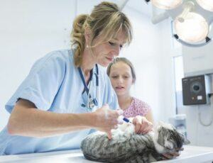 Vet giving cat vaccination