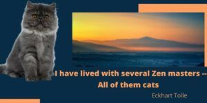 I have lived with several Zen masters; all of them cats