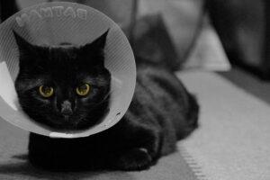 Black cat in cone