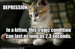 Kitten: depression can last as long as 2.3 seconds