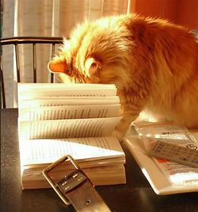 Cat researching in book
