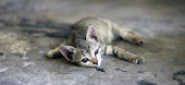 Small cat sprawled on ground