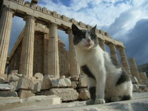 Cat sitting by the Parthenon