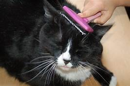 black cat being combed