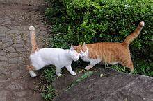 two cats rubbing heads, tails erect