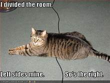 "cat lying across crack: ""I divided the room. Left side's mine. So's the right."