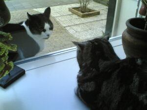 Cats staring at each other through window