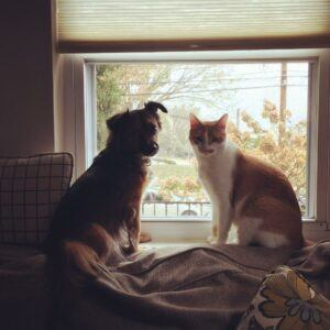 Cat and dog sitting together in window