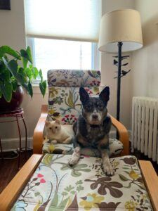 white cat and grey dog on chair
