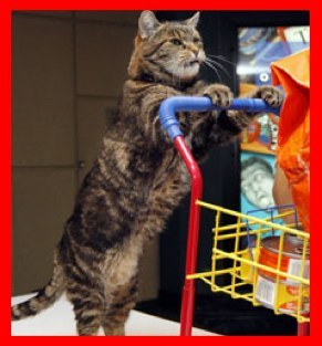 Cat pushing shopping cart
