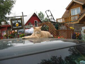 Ginger cat on car hood