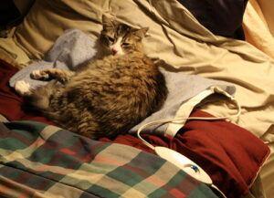 cat lying on heating pad