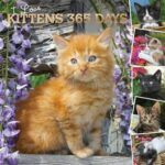 Orange kitten on wall calendar