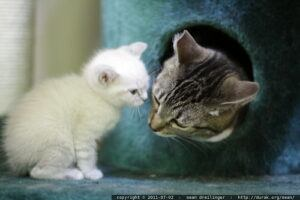 cat in felt bed, sniffing kitten through the opening