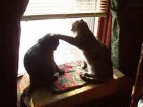 two cats in window; one socks the other