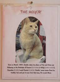 Poster picture of Mayor Stubbs, a ginger cat