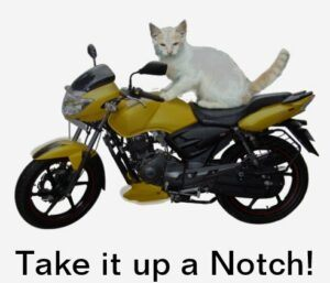 white cat on motorcycle