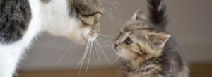 Cat and kitten getting acquainted