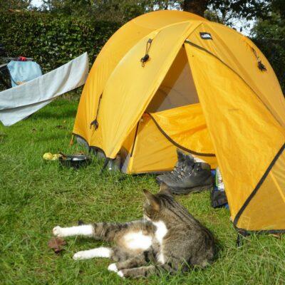 tiger cat lying near yellow tent