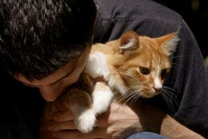 Man holding cat and giving affection