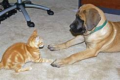 Large dog and small cat sitting, facing each other